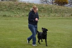 One to One Dog Training