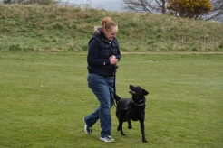 One to One Dog Training